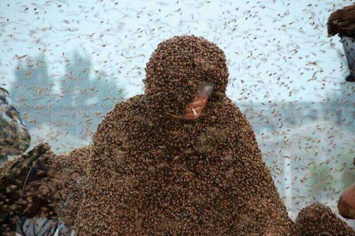 蜜蜂与蝴蝶童话作文