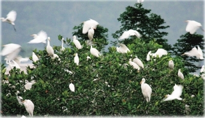 """三亚多""""举措""""保护鸟类栖息地"""