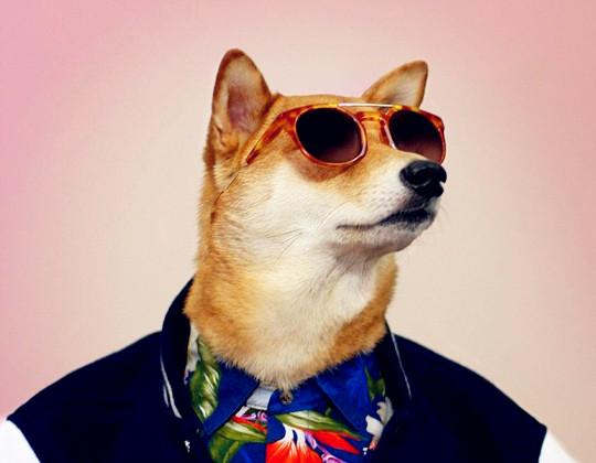 纽约宠物狗穿男装造型走红 成网络明星