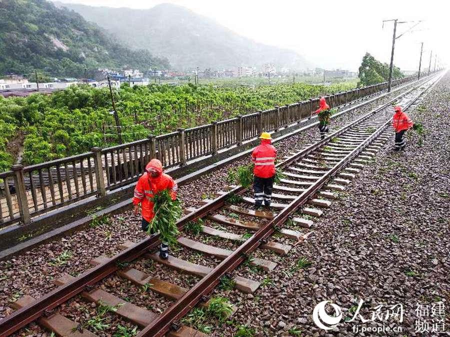 7月11日12时许,福州电务段应急抢修人员登乘轨道车,进行台风过后的设备巡视。图为工人正在捡拾被台风刮入线路的树枝。