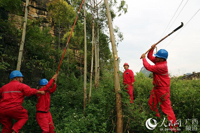 大新县城关供电所工作人员在台风前集中力量开展线路清障