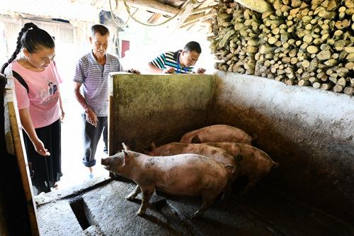 2019年9月13日,在贵州省遵义市红花岗区海龙镇贡米村,基层党员干部舒万艳(左)和邹松(右)在调查研究过程中向贫困户郑福光了解生猪养殖情况。