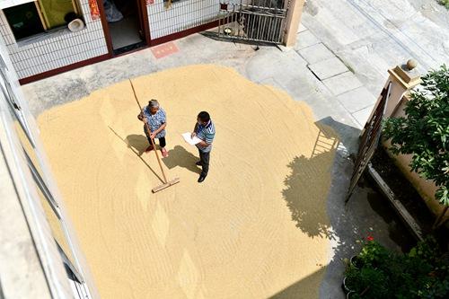 2019年9月13日,在贵州省遵义市红花岗区海龙镇贡米村,基层党员干部邹松在调查研究过程中与晒谷子的村民屈可畏(左)交流。