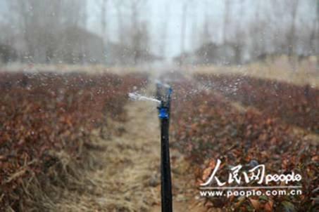 临沭 节水灌溉让230亩经济林果平安度旱期