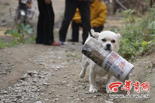 会取报纸的狗