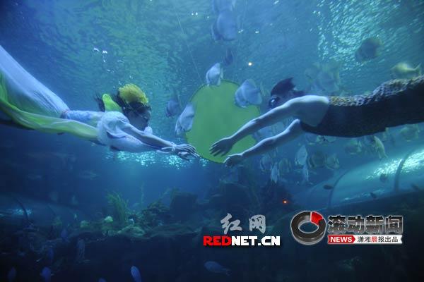 """长沙海底世界海洋馆内将上演真实版的""""嫦娥与后羿"""""""